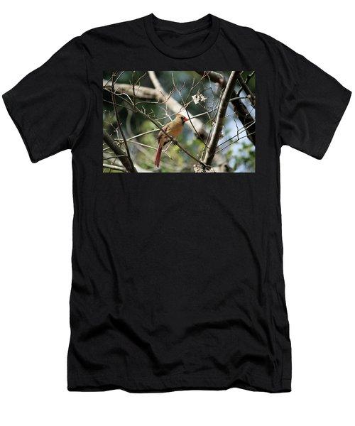 Female Cardinal Men's T-Shirt (Slim Fit) by Cathy Harper