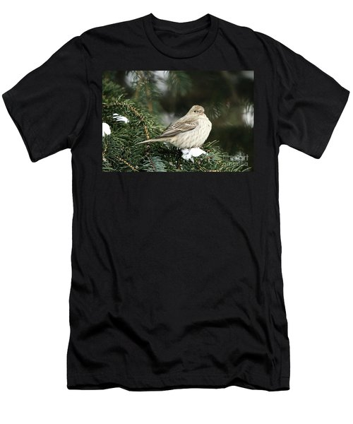 Female House Finch On Snow Men's T-Shirt (Athletic Fit)