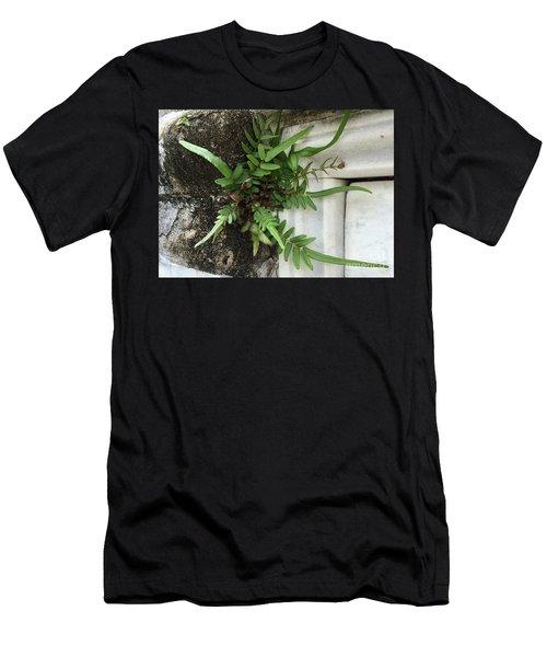Fern Men's T-Shirt (Slim Fit) by Kim Nelson