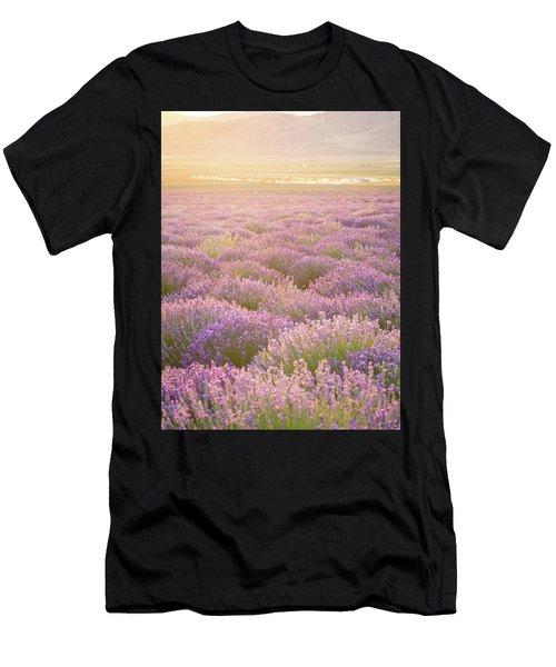 Fields Of Lavender Men's T-Shirt (Athletic Fit)