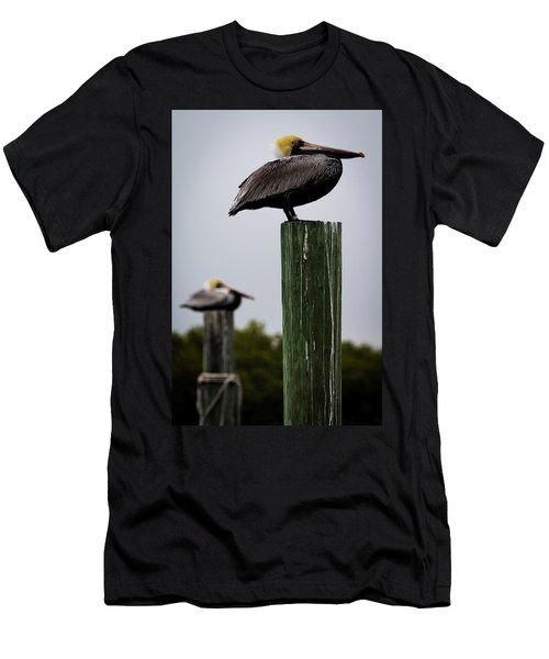 Florida Brown Pelican Men's T-Shirt (Athletic Fit)