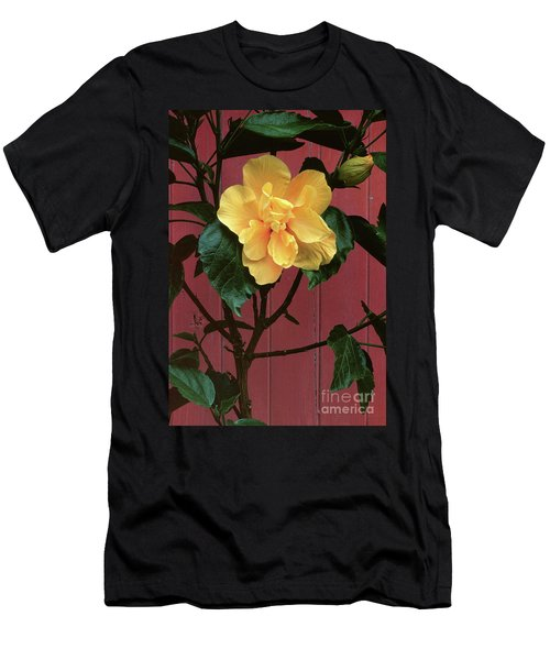 flower photographs - Yellow Rose Men's T-Shirt (Athletic Fit)