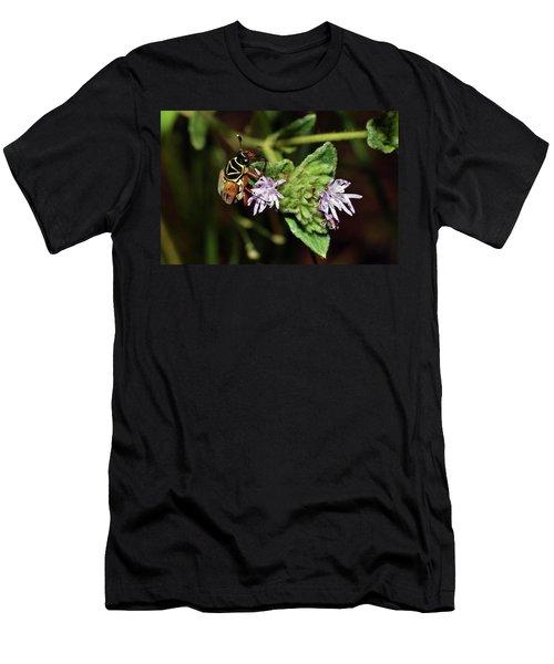 Flower Scarab - Trigonopeltastes Delta Men's T-Shirt (Athletic Fit)