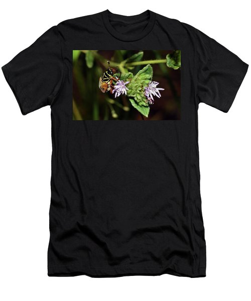 Flower Scarab - Trigonopeltastes Delta Men's T-Shirt (Athletic Fit)