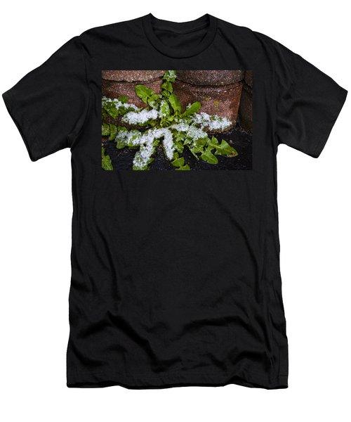 Frosted Dandelion Leaves Men's T-Shirt (Athletic Fit)