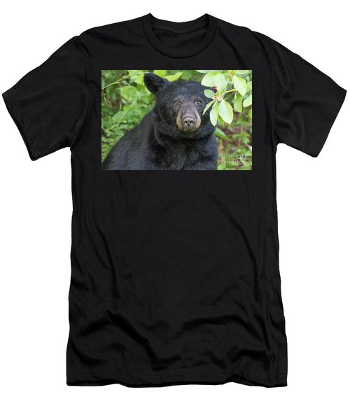 Gazing Black Bear Men's T-Shirt (Athletic Fit)