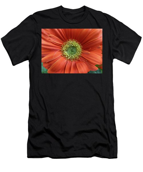 Gerber Daisy Men's T-Shirt (Athletic Fit)
