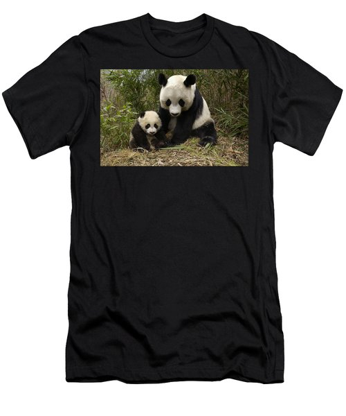 Men's T-Shirt (Athletic Fit) featuring the photograph Giant Panda Ailuropoda Melanoleuca by Katherine Feng