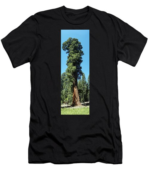 Giant Sequoia, Sequoia Np, Ca Men's T-Shirt (Athletic Fit)