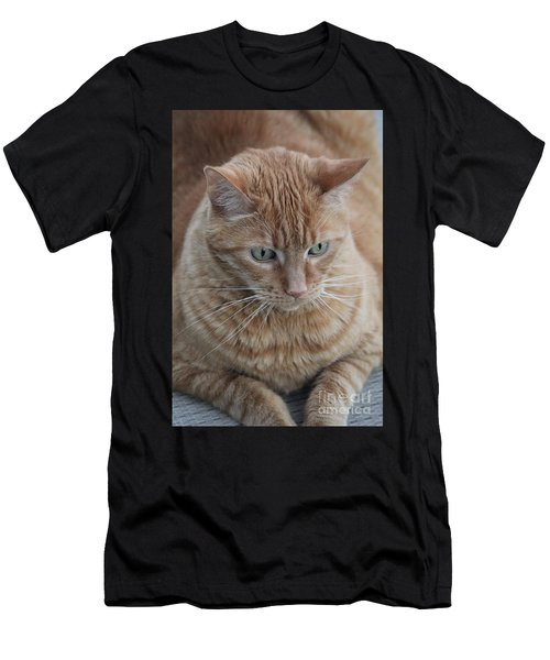 Ginger Cat Men's T-Shirt (Athletic Fit)