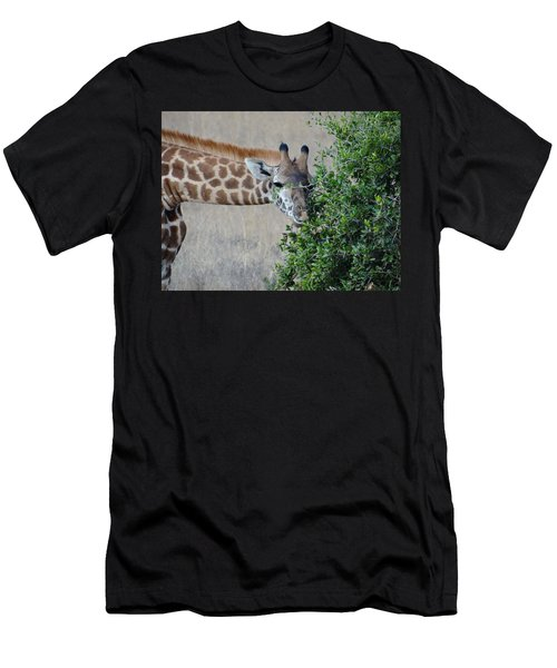 Giraffes Eating - Front View Men's T-Shirt (Athletic Fit)