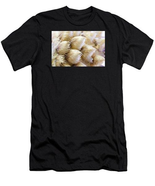 Globe Cornflower Seed Heads - Macro Men's T-Shirt (Athletic Fit)