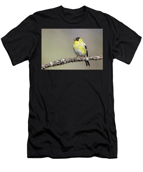 Gold Finch Men's T-Shirt (Athletic Fit)