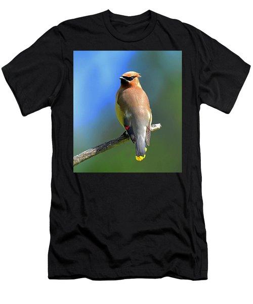 Gorgeous Cedar Waxwing Men's T-Shirt (Athletic Fit)