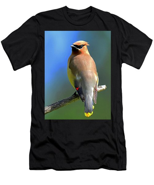 Gorgeous Cedar Waxwing Men's T-Shirt (Athletic Fit)
