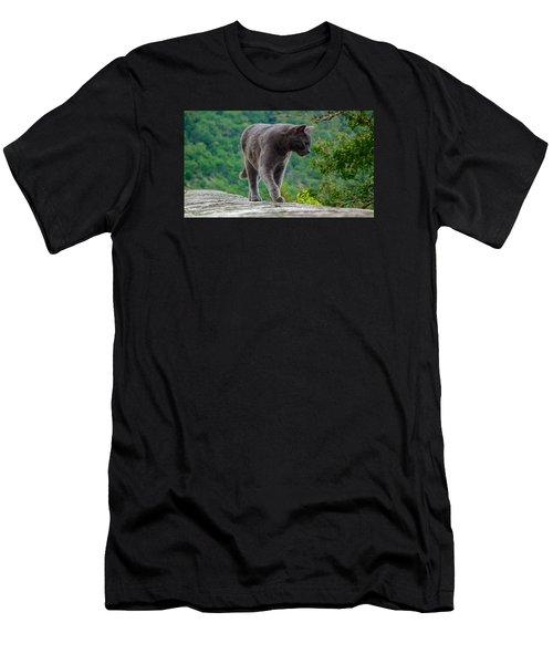 Gray Cat Stalking Men's T-Shirt (Athletic Fit)
