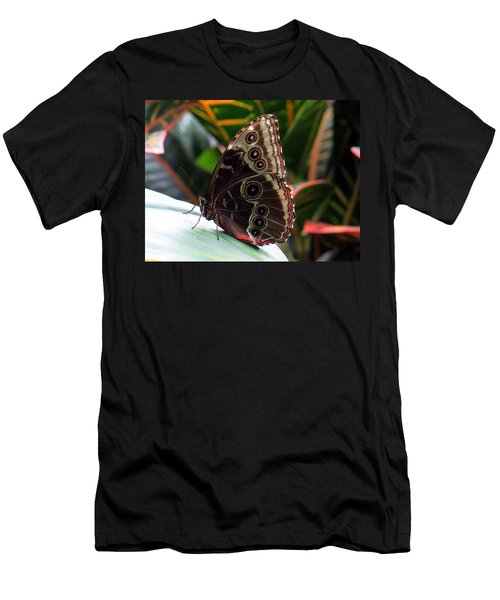 Gray Cracker Butterfly Men's T-Shirt (Athletic Fit)