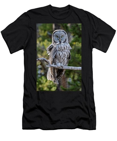 Great Grey Owl Yellowstone Men's T-Shirt (Athletic Fit)