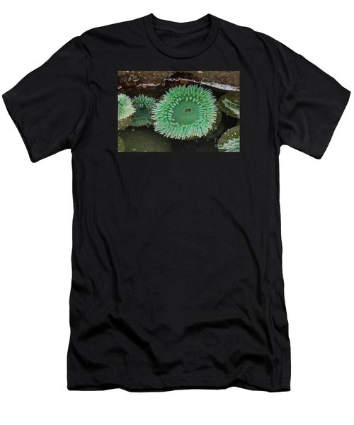 Green Anemone Men's T-Shirt (Slim Fit) by Chuck Flewelling