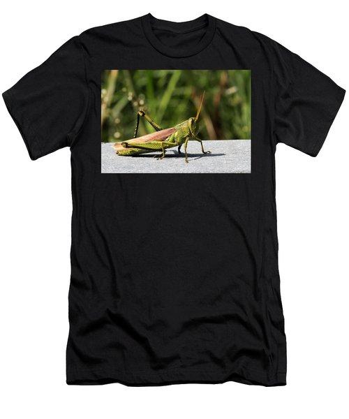 Green Grasshopper Men's T-Shirt (Athletic Fit)