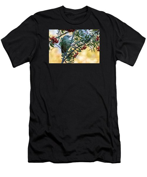 Grey Headed Woodpecker Female Men's T-Shirt (Athletic Fit)