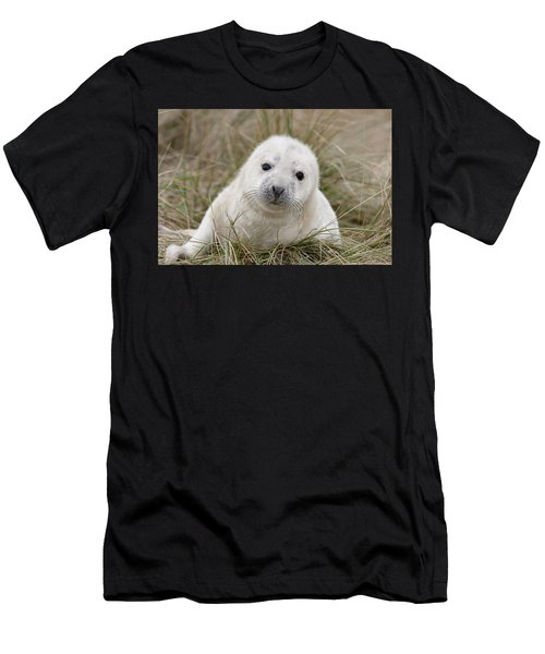 Grey Seal Pup Men's T-Shirt (Athletic Fit)