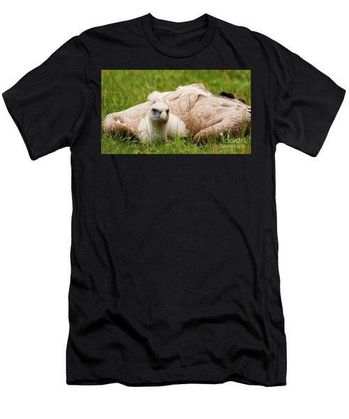 Griffon Vulture Men's T-Shirt (Athletic Fit)