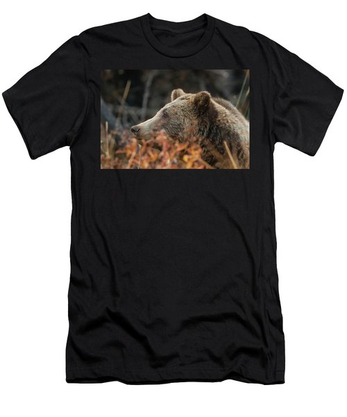 Grizzly Bear Portrait In Fall Men's T-Shirt (Athletic Fit)