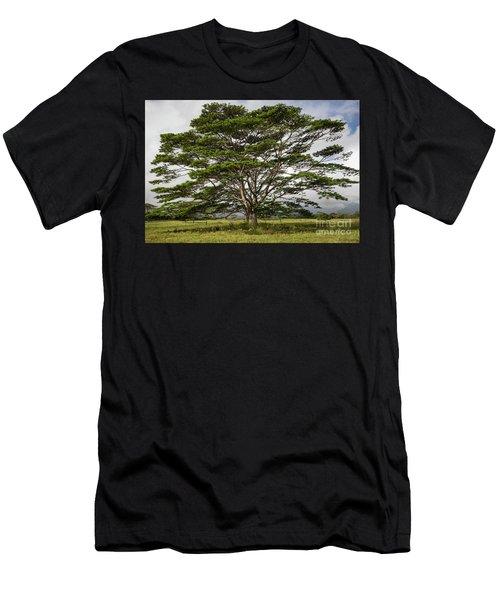 Hawaiian Moluccan Albizia Tree Men's T-Shirt (Athletic Fit)