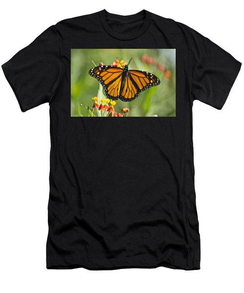 Hawaiian Monarch 3 Men's T-Shirt (Athletic Fit)