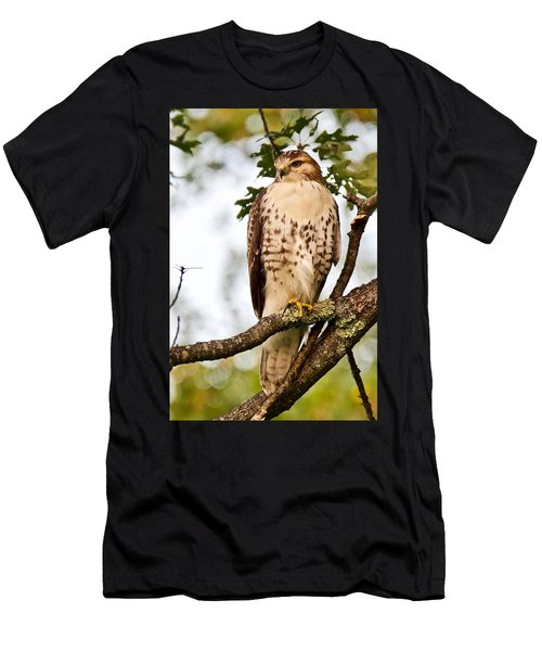 Hawk In Evening Light Men's T-Shirt (Athletic Fit)