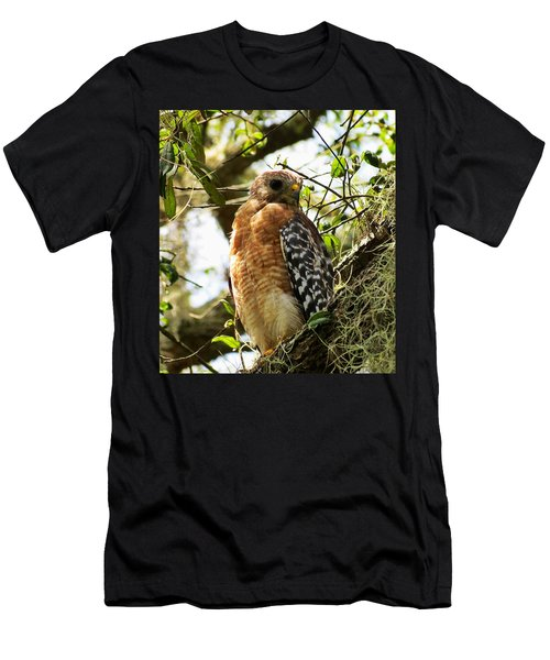 Hawk Taking A Rest On A Tree In Lakeland Florida Men's T-Shirt (Athletic Fit)