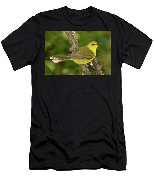 Hooded Warbler Female Men's T-Shirt (Athletic Fit)