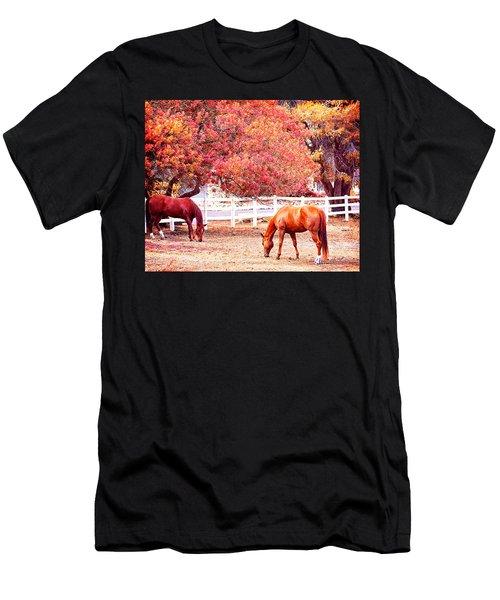 Horses, Grazing Men's T-Shirt (Athletic Fit)