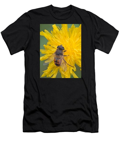 Hover Fly On Sow Thistle Men's T-Shirt (Athletic Fit)