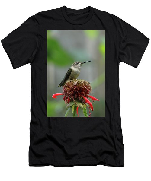 Humming Bird Atop Bee Balm Men's T-Shirt (Athletic Fit)