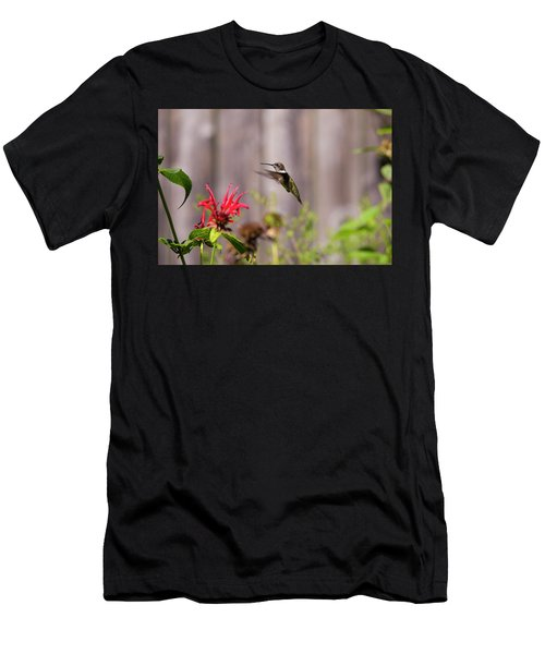 Humming Bird Hovering Men's T-Shirt (Athletic Fit)