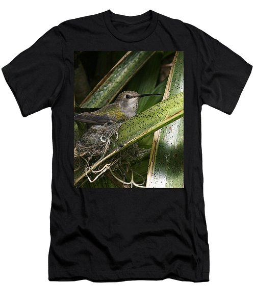 Nesting Anna's Hummingbird Men's T-Shirt (Athletic Fit)