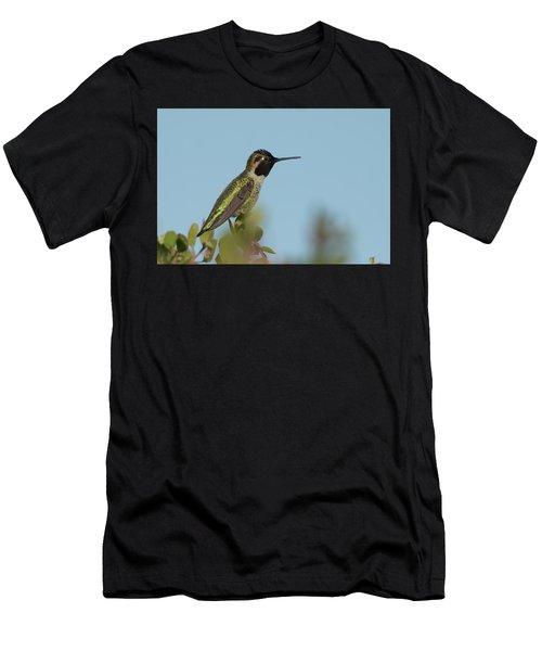 Hummingbird On Watch Men's T-Shirt (Athletic Fit)