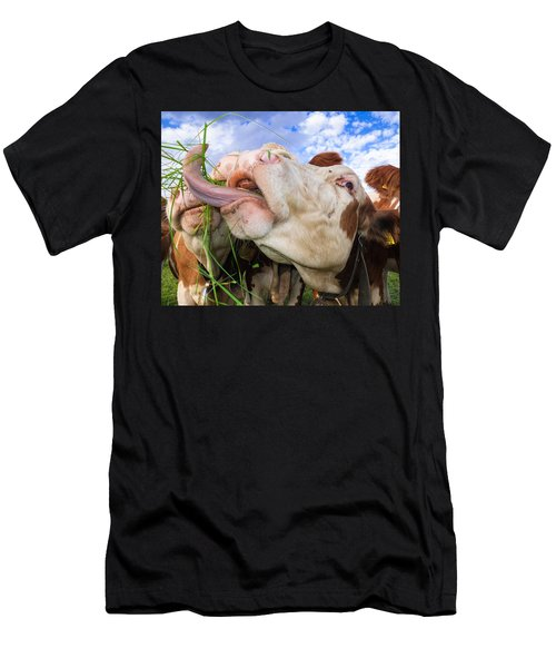 Hungry Cow Eating Grass Funny Picture Men's T-Shirt (Athletic Fit)