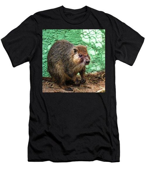 Hutia, Tree Rat Men's T-Shirt (Athletic Fit)