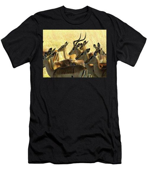 Impalas In The Plains Men's T-Shirt (Athletic Fit)