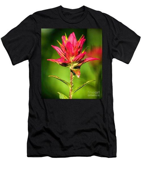 Indian Paintbrush Men's T-Shirt (Athletic Fit)