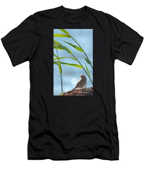 Ipswich Sparrow Men's T-Shirt (Athletic Fit)
