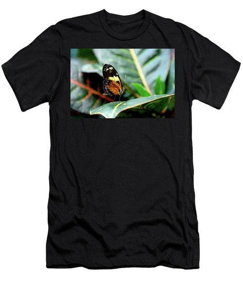 Ismenius Tiger Butterfly-2 Men's T-Shirt (Athletic Fit)