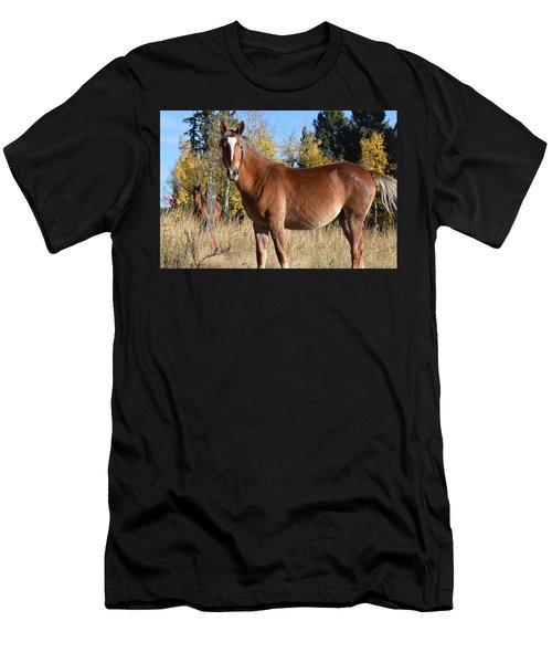 Horse Cr 511 Divide Co Men's T-Shirt (Athletic Fit)