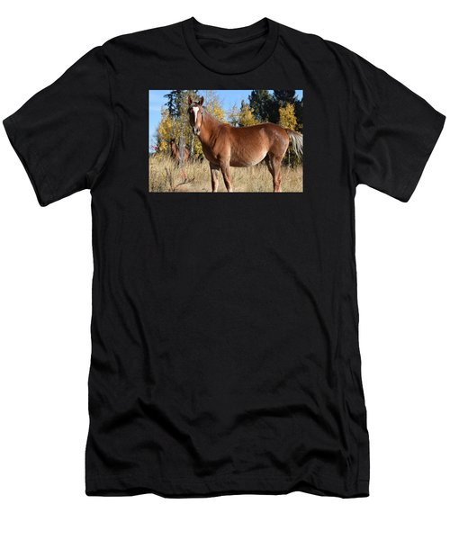 Horse Cr 511 Divide Co Men's T-Shirt (Athletic Fit)