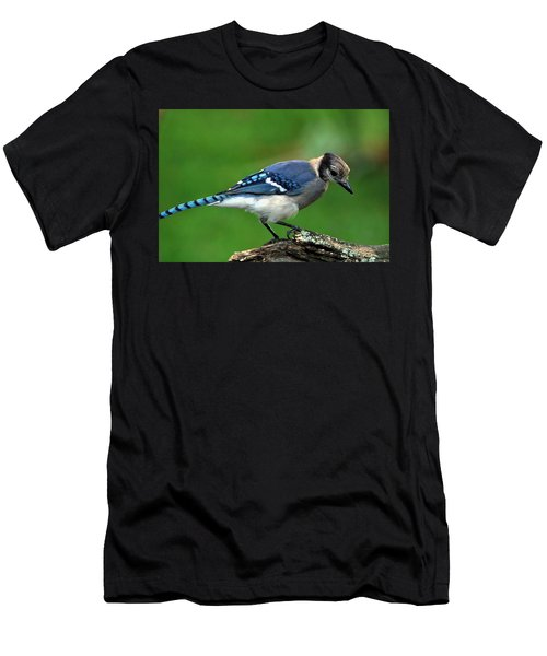 Juvenile Blue Jay  Men's T-Shirt (Athletic Fit)