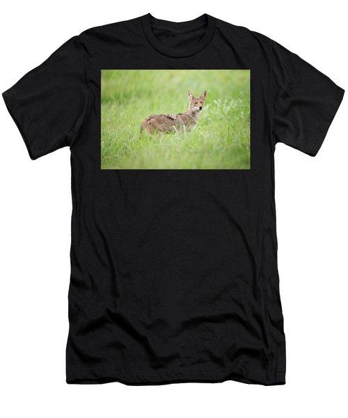 Juvenile Coyote Men's T-Shirt (Athletic Fit)
