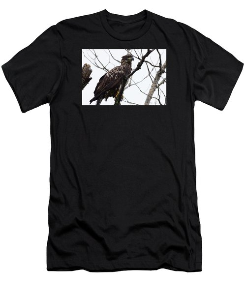 Men's T-Shirt (Slim Fit) featuring the photograph Juvenile Eagle 2 by Steven Clipperton